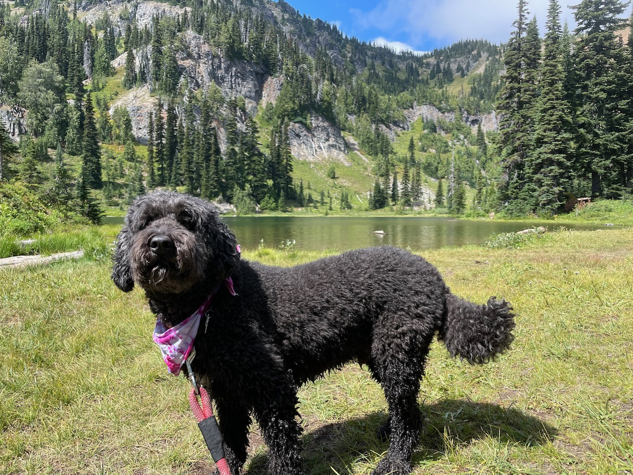 Our dog Archie at Sheep Lake