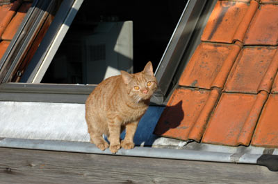 """""""A cute kitty seen from our window in Bruges."""""""